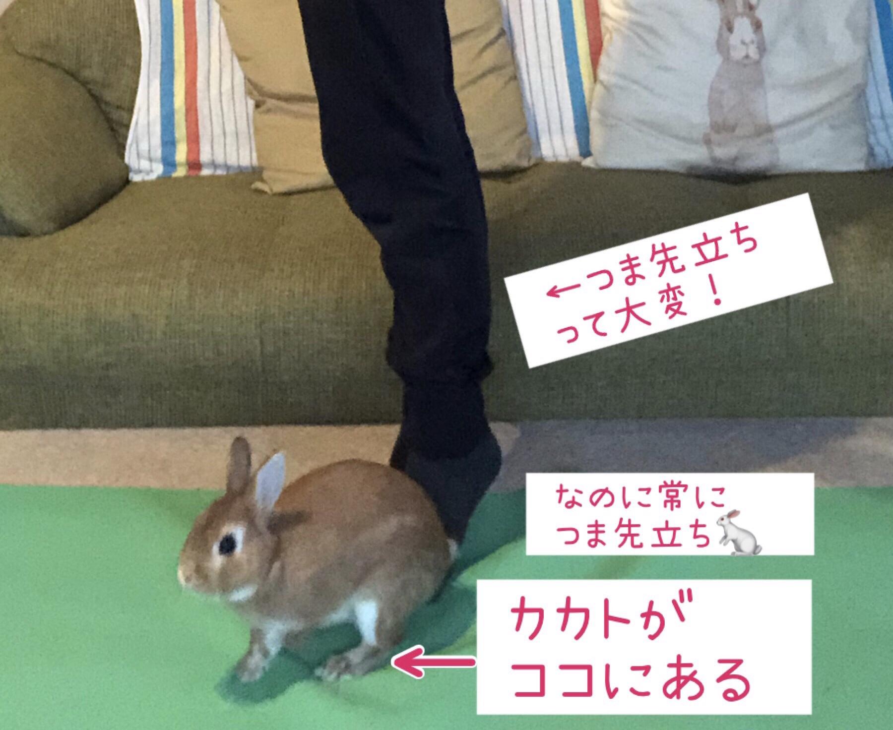 美脚美尻エクササイズ♡プリエ
