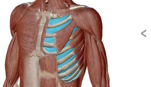 肋骨、動いてますか?
